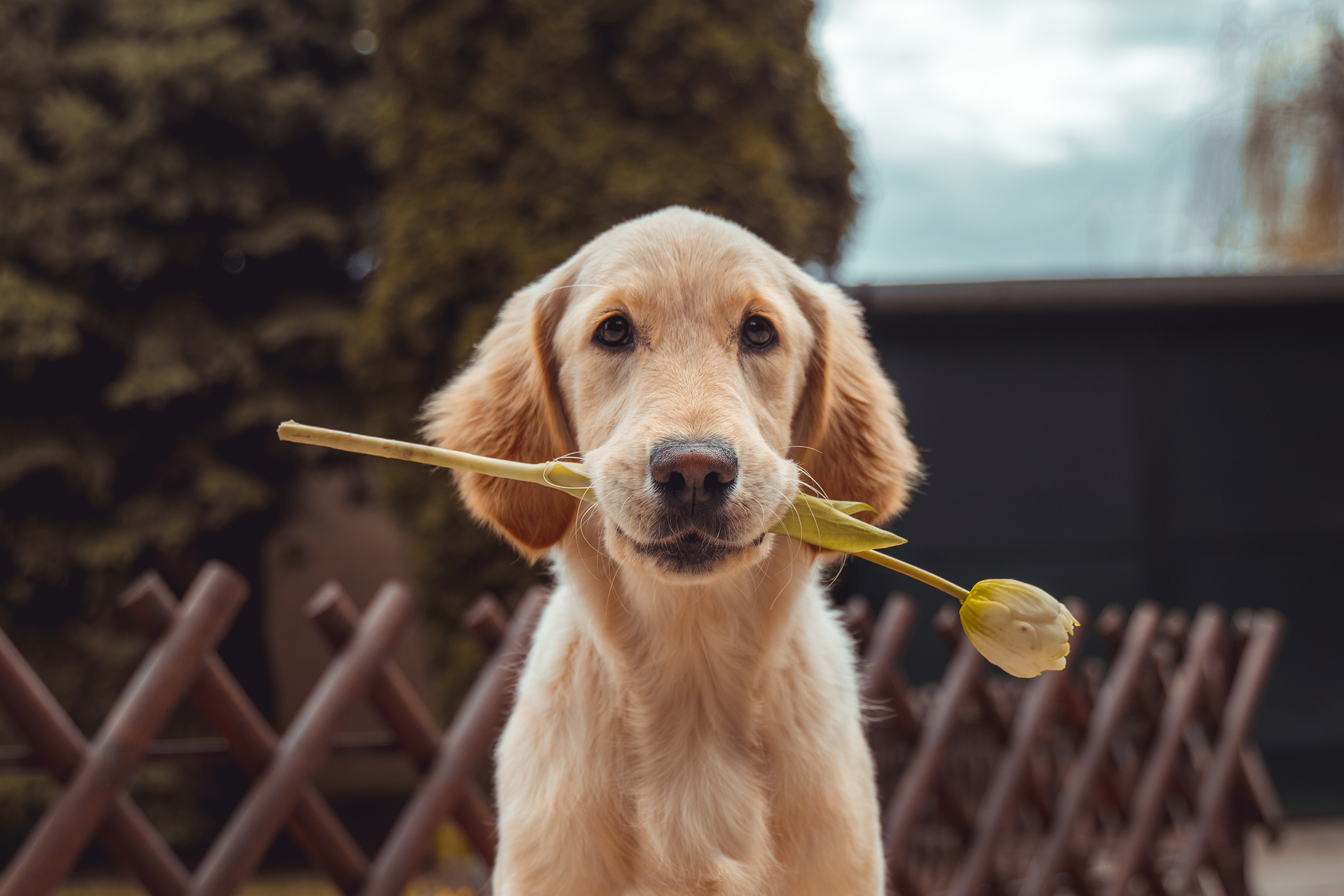 CBD Benefits for Pets: How CBD Can Improve Your Dog's Quality Of Life